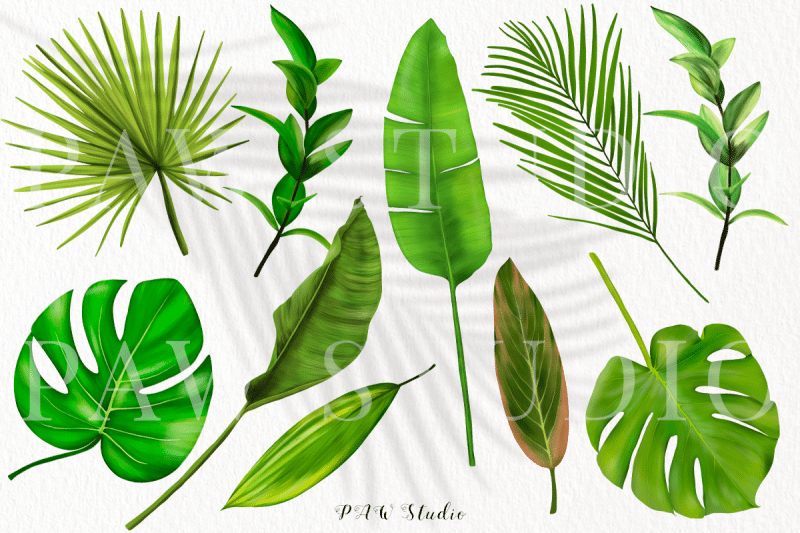 monstera leaf clipart